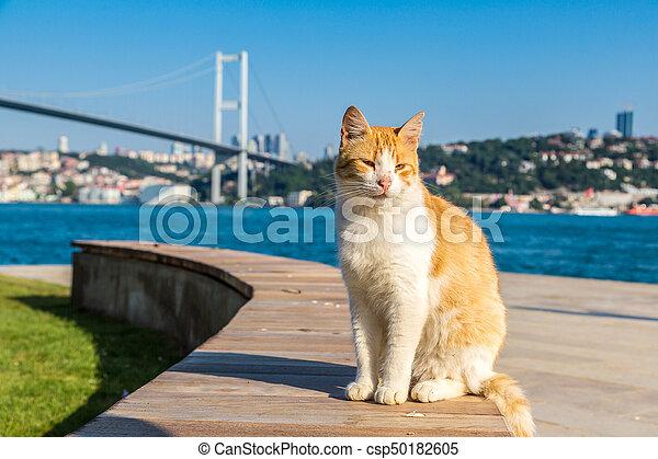 Cat and Bosporus bridge in Istanbul - csp50182605