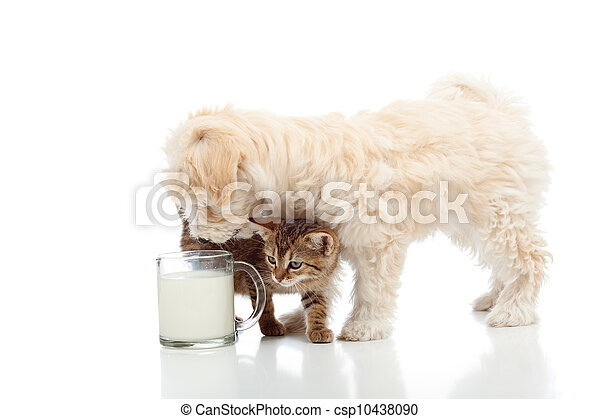 Cat and dog feeding together - csp10438090