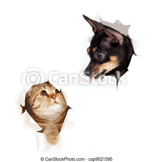 cat and dog in paper side torn hole isolated - csp9021595