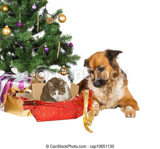 Opening Xmas Gift Dog And Cat