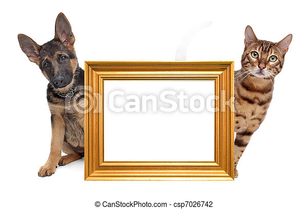 Cat and dog side to side - csp7026742