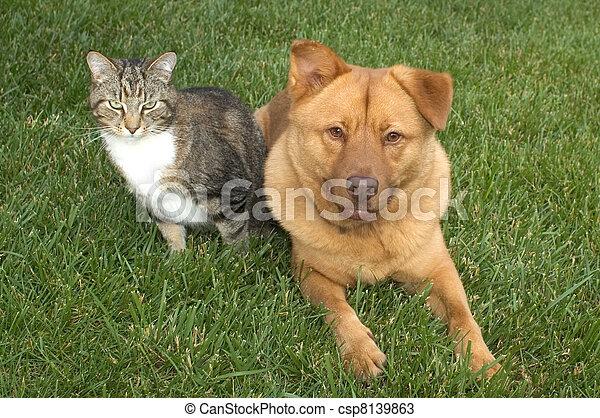 Cat and Dog - csp8139863