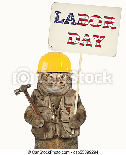 Cat and labor day 3 - csp55399294