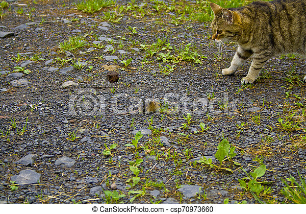 Cat and mouse are watching each other. - csp70973660