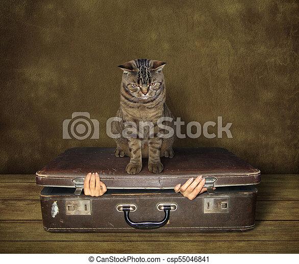 Cat and suitcase - csp55046841