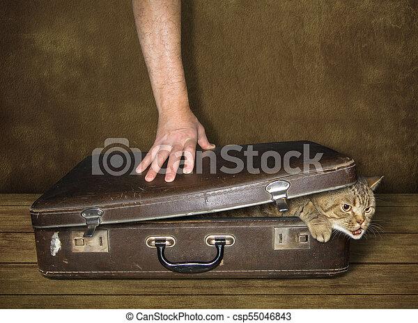 Cat and suitcase - csp55046843
