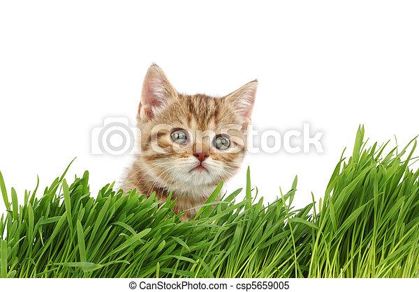 cat behind grass - csp5659005