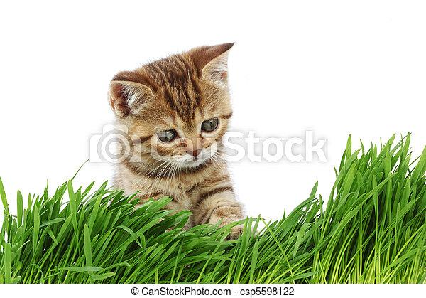 cat behind grass - csp5598122
