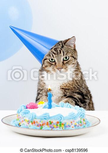 Cat Birthday Party Happy