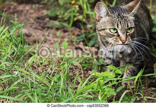 cat caught a mouse - csp53552366