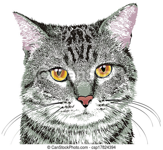 Gray Tabby Cat With Yellow Eyes On White Background