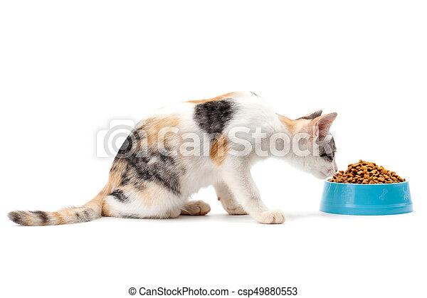 cat eating pet dried food - csp49880553
