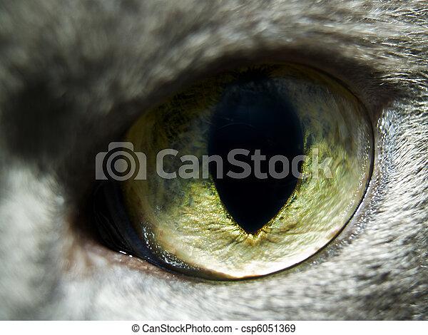 Cat eye 2 - csp6051369