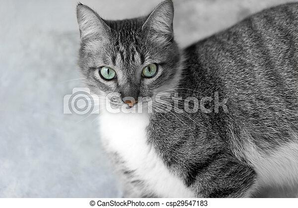 Cat Eyes - csp29547183