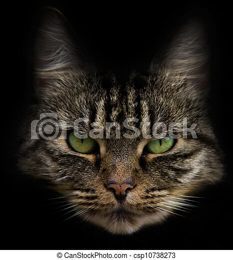 Cat face or portrait - csp10738273