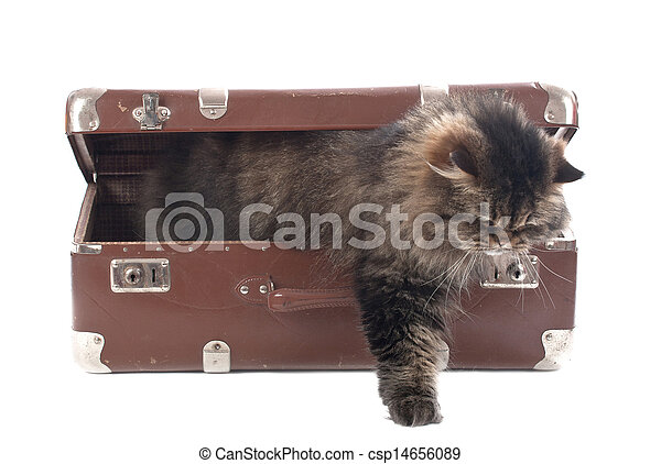 Cat gets out of an vintage suitcase - csp14656089