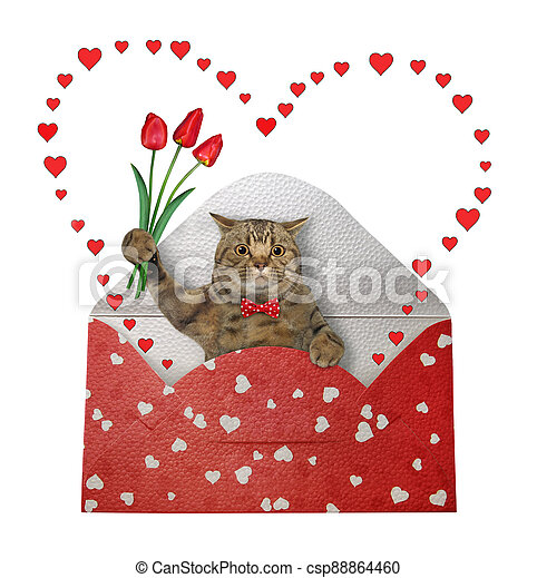 Cat gray in holiday envelope 2 - csp88864460