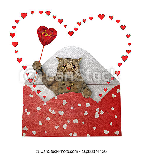 Cat gray in holiday envelope 3 - csp88874436