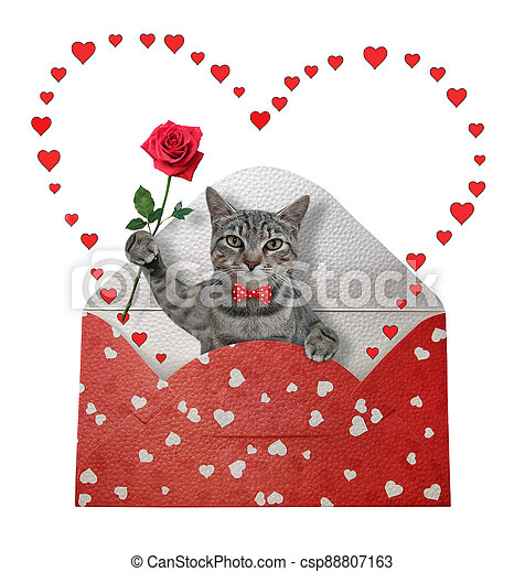 Cat gray in holiday envelope - csp88807163