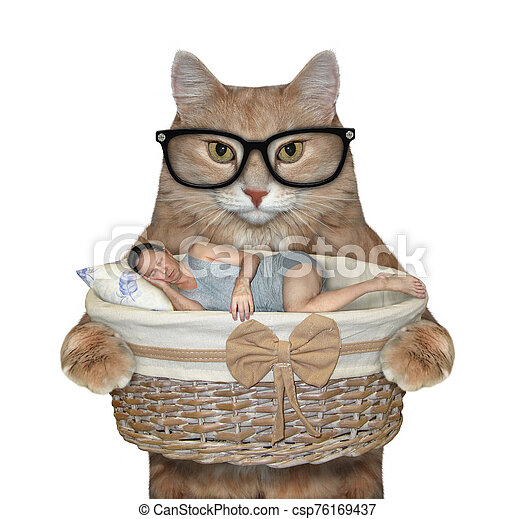 Cat holds basket with sleeping man 2 - csp76169437