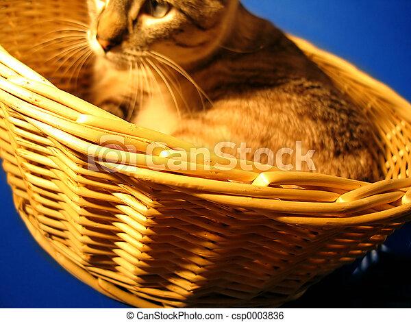 Cat in a Basket 2 - csp0003836