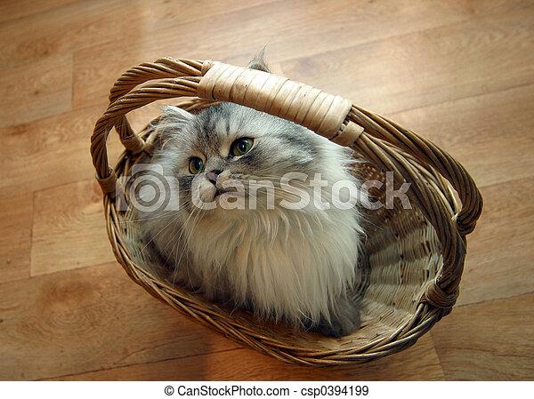 Cat in a basket - 2 - csp0394199