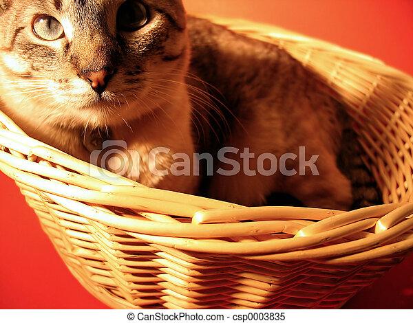 Cat in a Basket - csp0003835