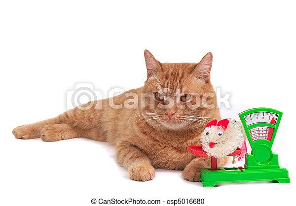Cat in a Department Store - csp5016680