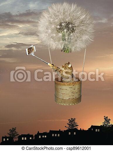 Cat in basket of dandelion balloon 2 - csp89612001