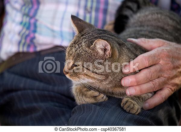 Cat in old man lap - csp40367581