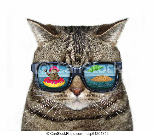 Cat in sunglasses with a reflection