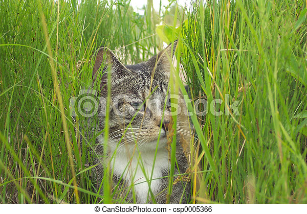 Cat in tall grass - csp0005366