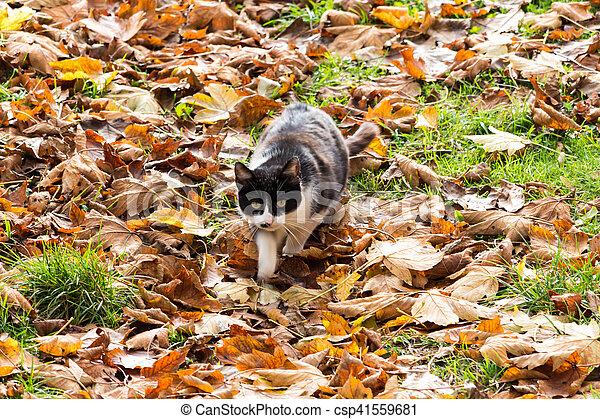 Cat in the autumn foliage. - csp41559681