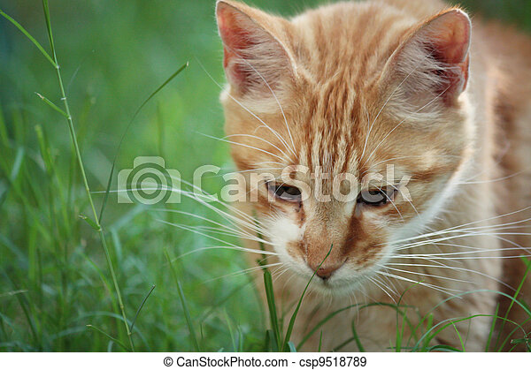 cat in the grass - csp9518789