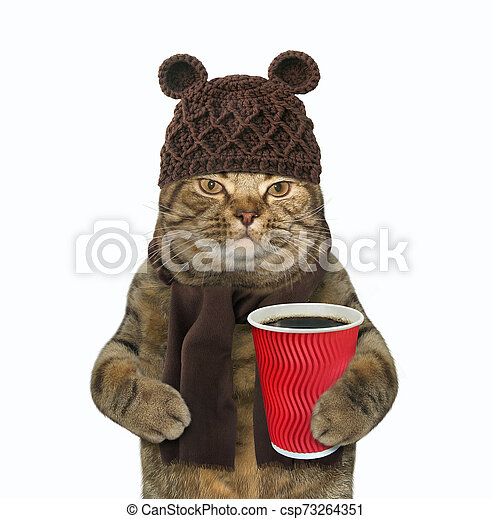 Cat in woolly hat with coffee 2 - csp73264351