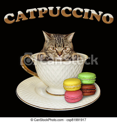 Cat inside coffee cup 2 - csp81991917