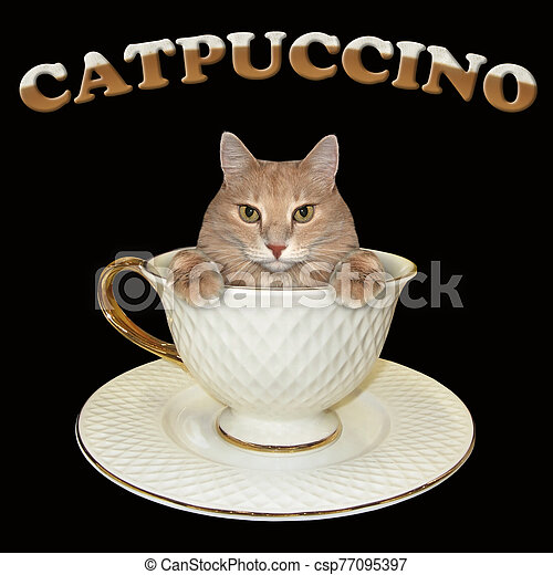 Cat inside coffee cup 2 - csp77095397