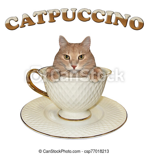 Cat inside coffee cup - csp77018213