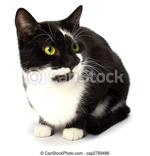 cat isolated on white background - csp2769486