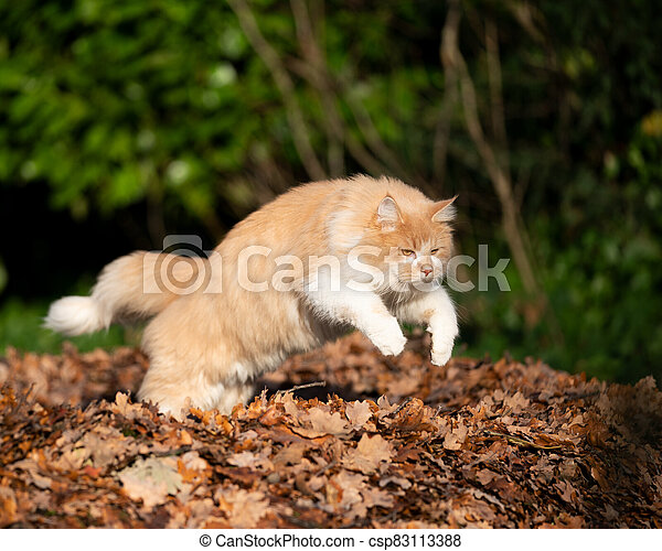 cat jumping over pile of autumn leaves - csp83113388