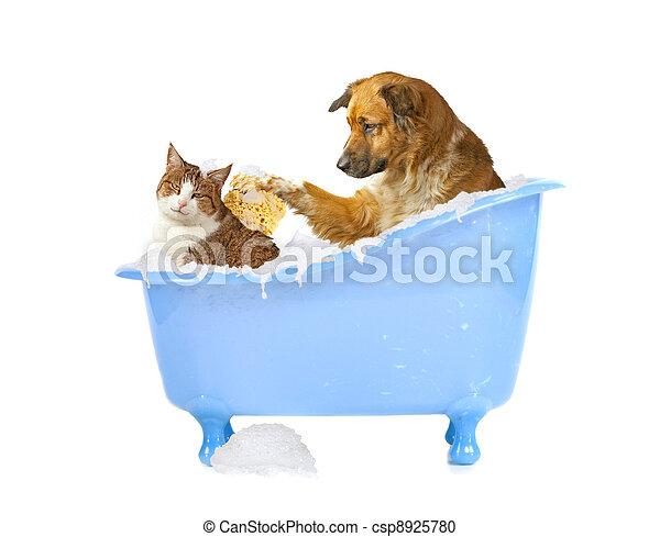 cat-lick - csp8925780