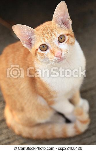 cat looking at the camera - csp22408420