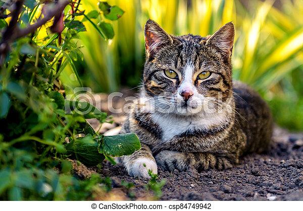 Cat lying on the ground - csp84749942