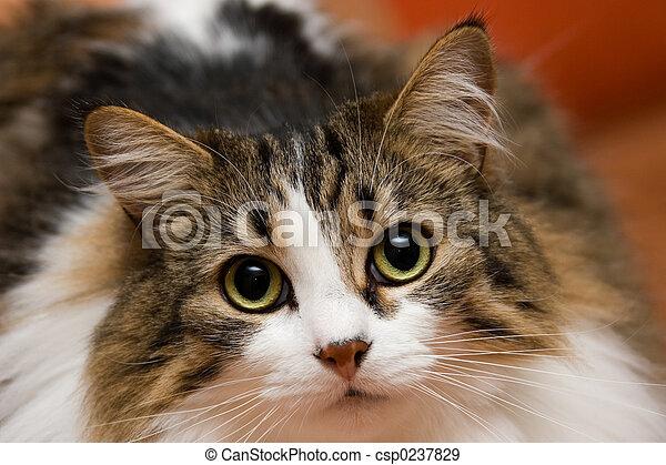 cat musja 03 - csp0237829