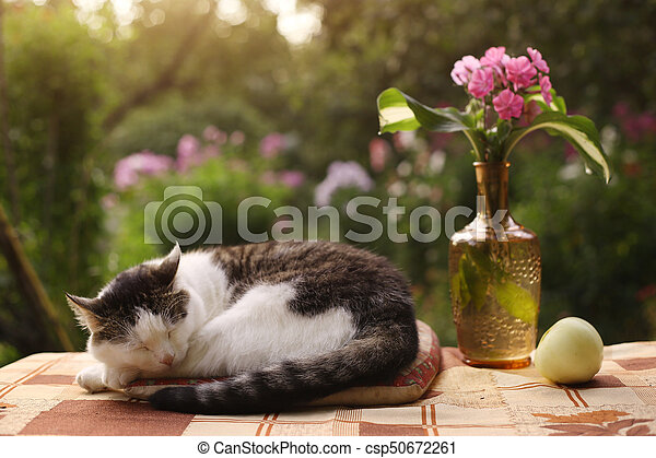 Cat Napping Sleep With Flox Flowers In Vase On Summer Garden Background
