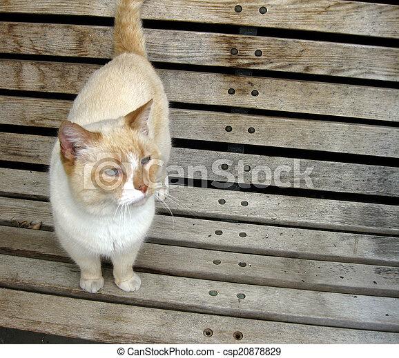 White Cat Sitting Bench City