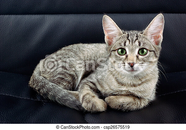 Cat on a chair - csp26575519