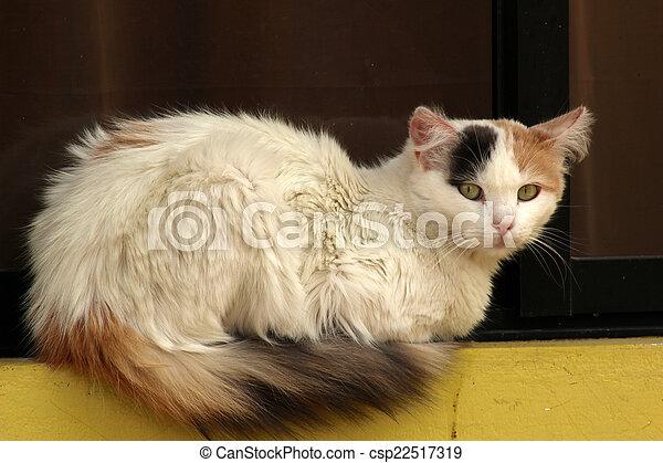 Cat on a Ledge - csp22517319
