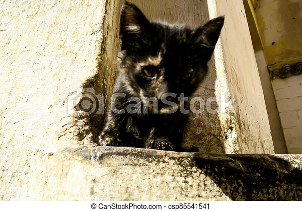 cat on fence, photo as background - csp85541541