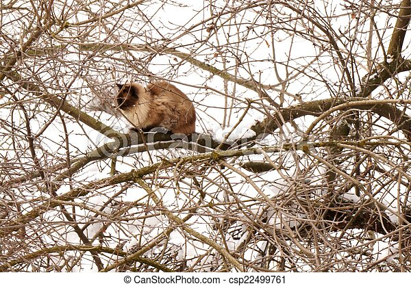 Cat on the snowy tree in winter - csp22499761